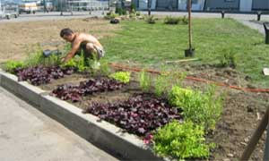 Засаждане на цветя в цветна фигура с малка градинска лопатка (снимки Лукс Гарден ООД)