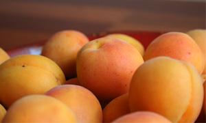 Лечебният плод на кайсия