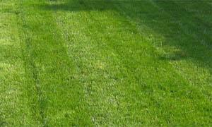 Предназначение и ефект на тревните площи - (Снимка Лукс Гарден ООД)