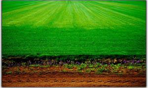 Тревни площи на сенчести места - (Снимка: Лукс Гарден ООД)